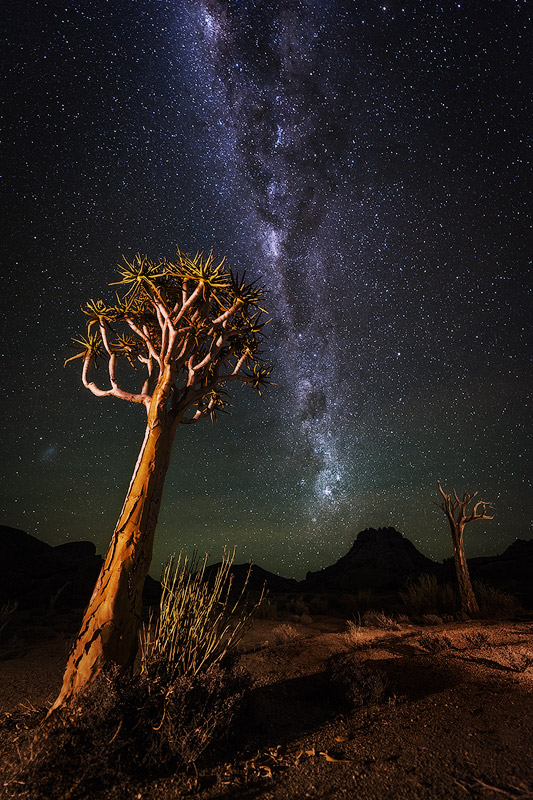 """Milky Way over Kokerboomkloof"" - Richtersveld National Park, Northern Cape, South Africa The Milky Way burns bright over the desolate but beautiful landscape of the Richtersveld. Quiver Trees (Kokerboom) stand proud in this harsh environment, reaching up to the stars above."