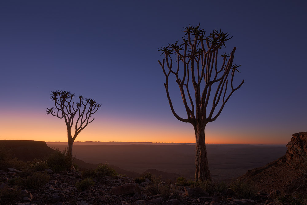 """Moment of Twilight"" - Fish River Lodge, Fish River Canyon, Namibia The first light of dawn paints the sky and landscape in soft hues of yellows and oranges as another hot day begins over the vast and arid landscape of the Fish River Canyon. In the foreground, two Quiver Trees stand strong in this harsh, yet beautiful part of the world."