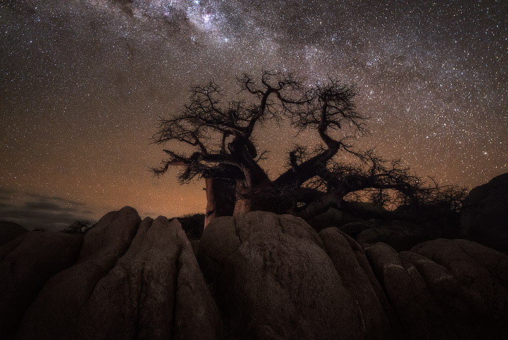 Mysterious Nocturnal Landscape