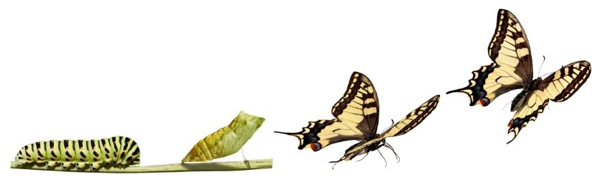Change-Butterfly.jpg