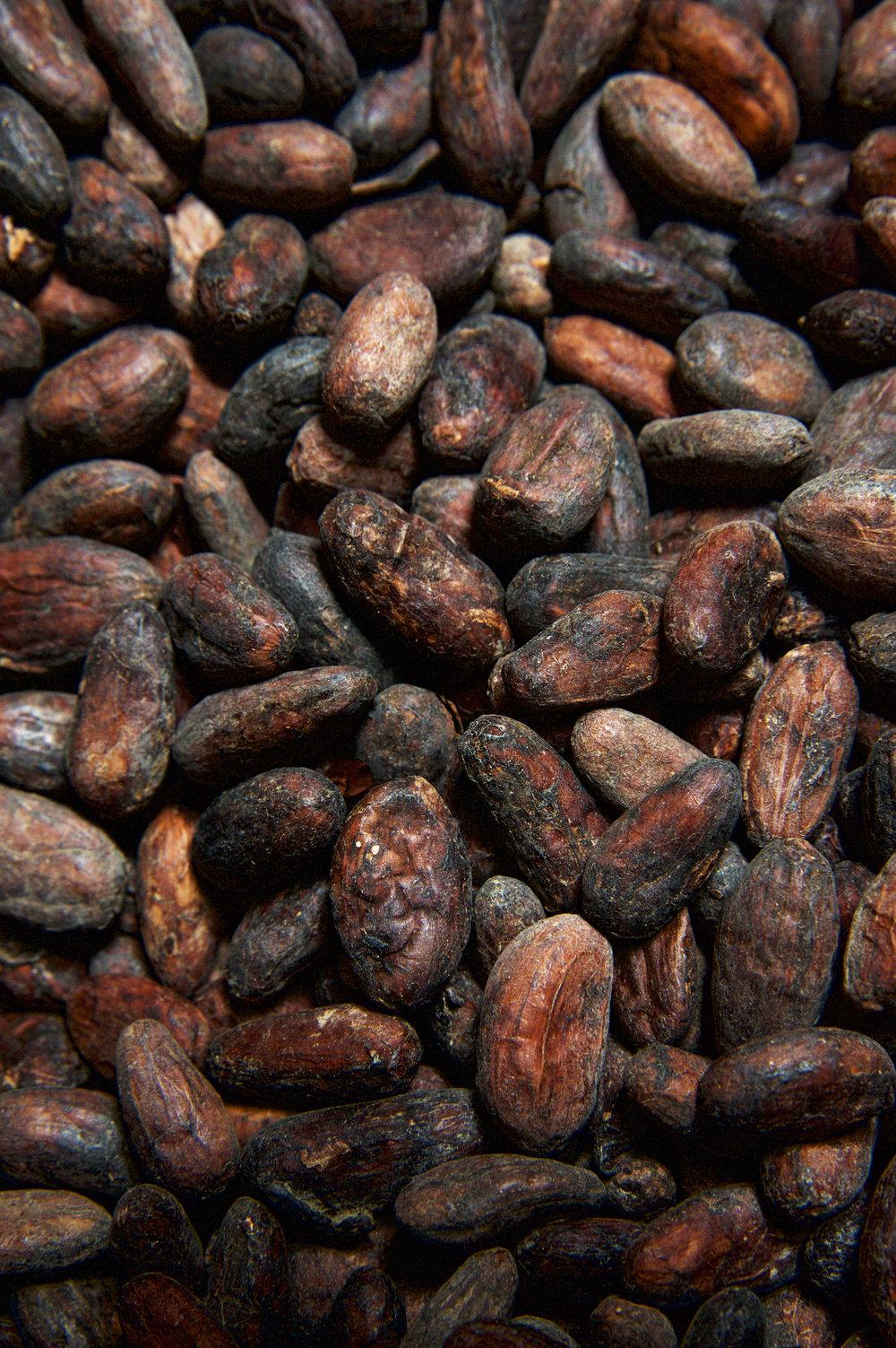 Kakaobohnen_DSC4390.jpg