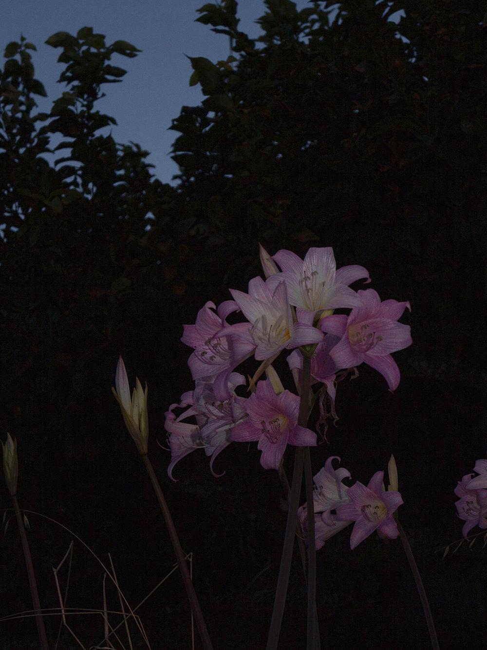 Blumen_IMG_7795.jpg