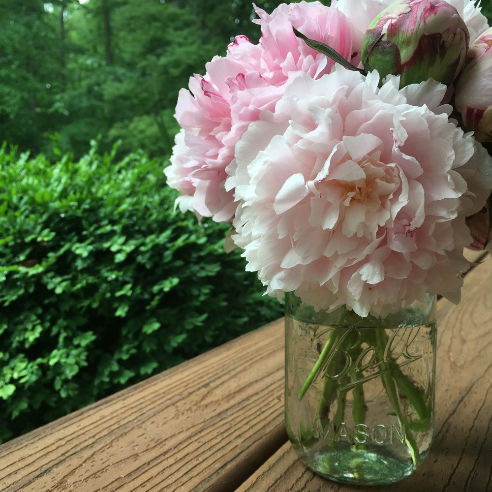 Peonies...my all-time favorite flower. I actually grew these!