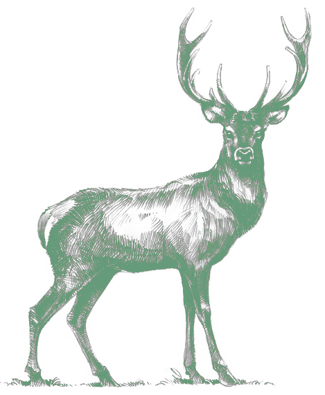 deer_green.png