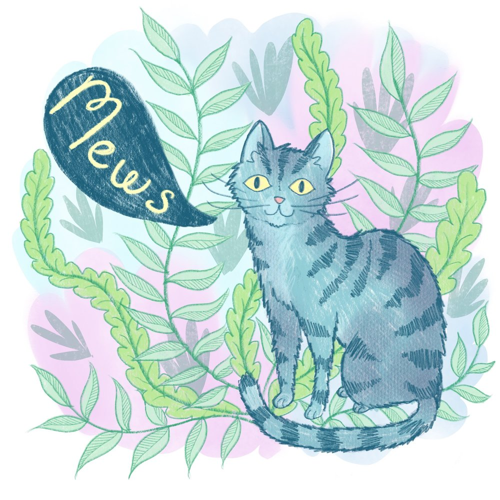 news cat.jpg