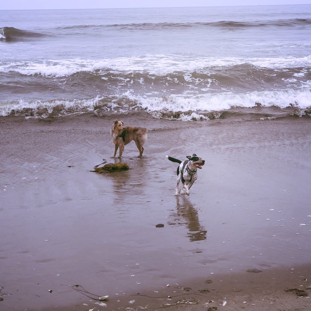 Leading a healthy, enriched life. - What do dogs really need?