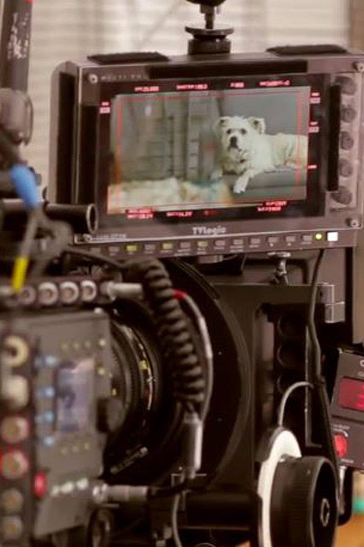 Film + Production Team
