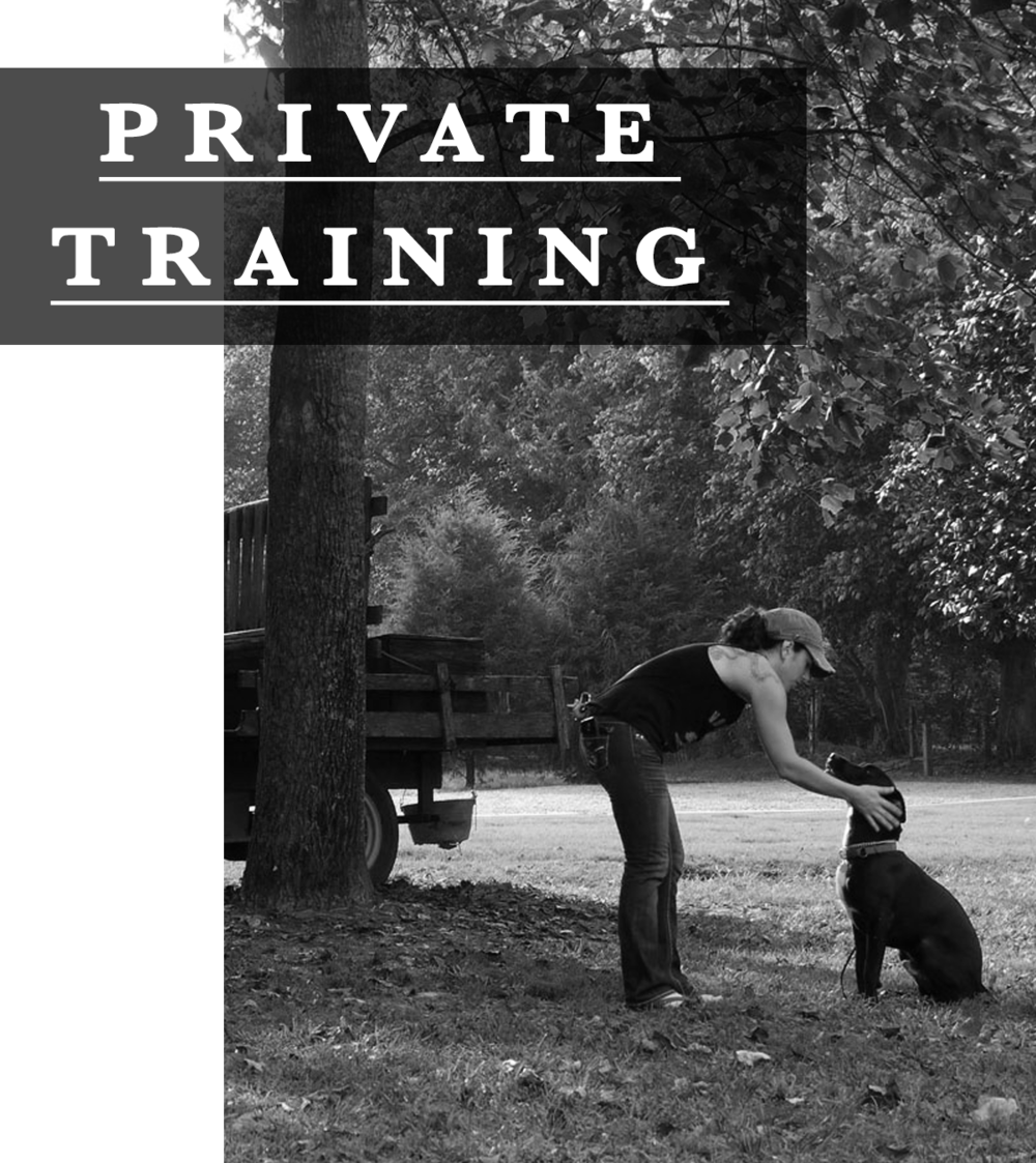 Private Training - With specialized training in aggressive dog rehabilitation, therapy work, service dog training and a degree in animal behavior, Andrea has a unique program designed to fit easily into daily life and be fun and exciting for both you and your dog. The Animal Dept. incorporates many different styles into private training to find the best most effective method for you and your family. We have a passion for bringing your pets to their full potential through fun and easy training!