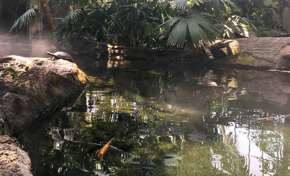 Turtle in captivity, Como Zoo, St. Paul, MN. 2018.