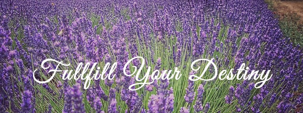yl-lavender-field-2.jpg