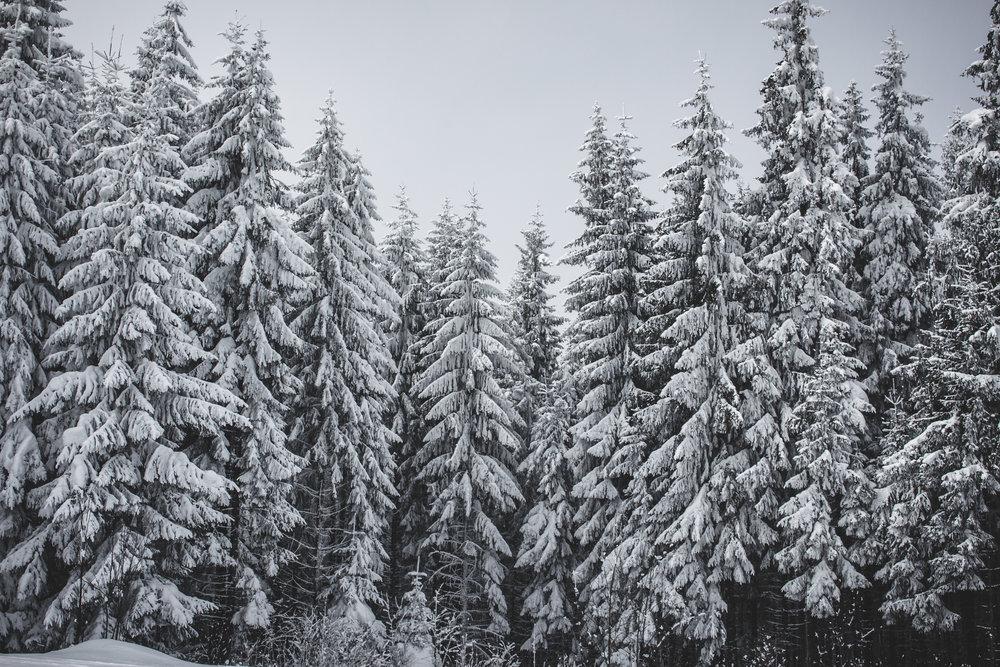 Winter Wonderland - 3 drops Wintergreen, 3 drops Peppermint, 2 drops Pine, 2 drops Sage