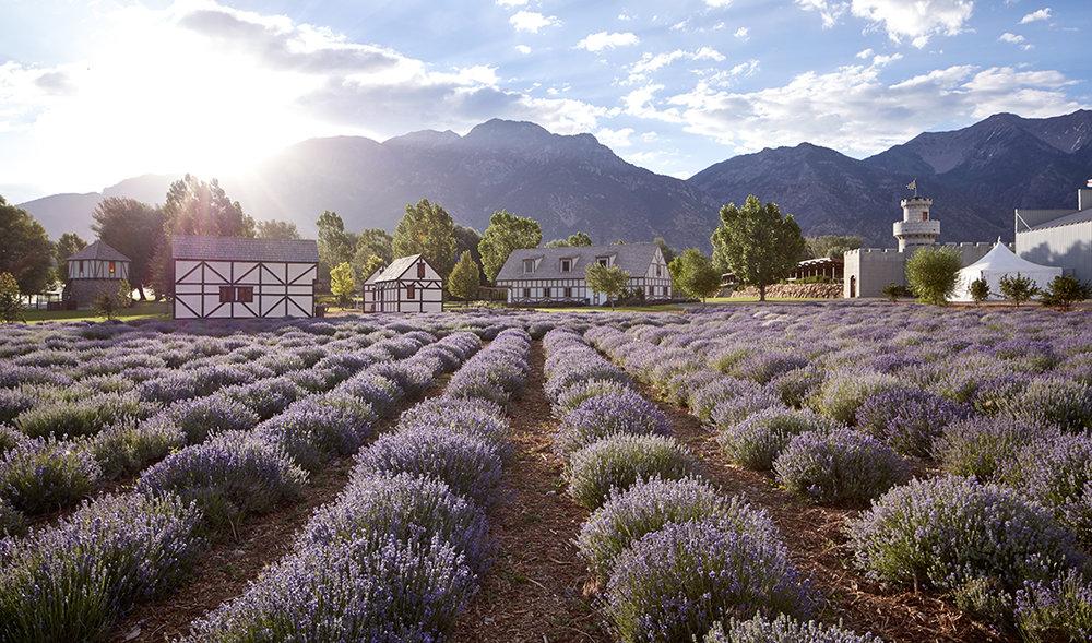 Lavender Farm & Distillery - MONA, UTAH, USA