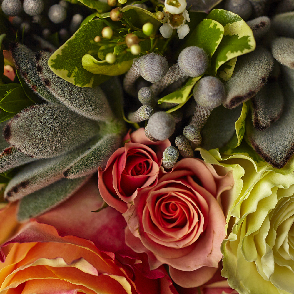 Candied Corals | Detail of spray roses, echeveria & silver brunia