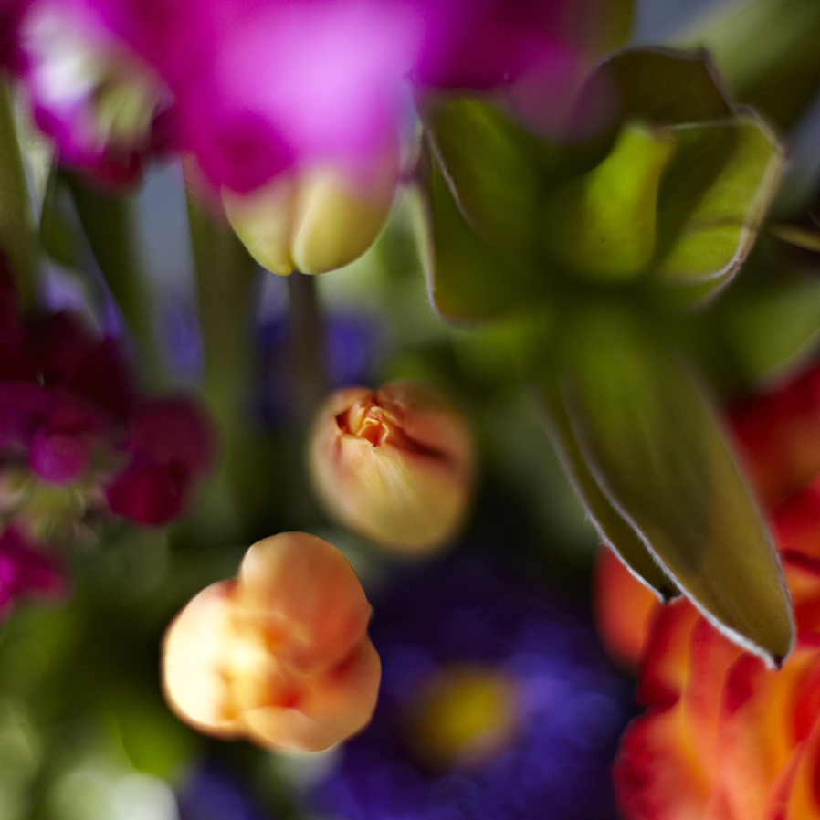 Vivid Hues | Detail of tulips