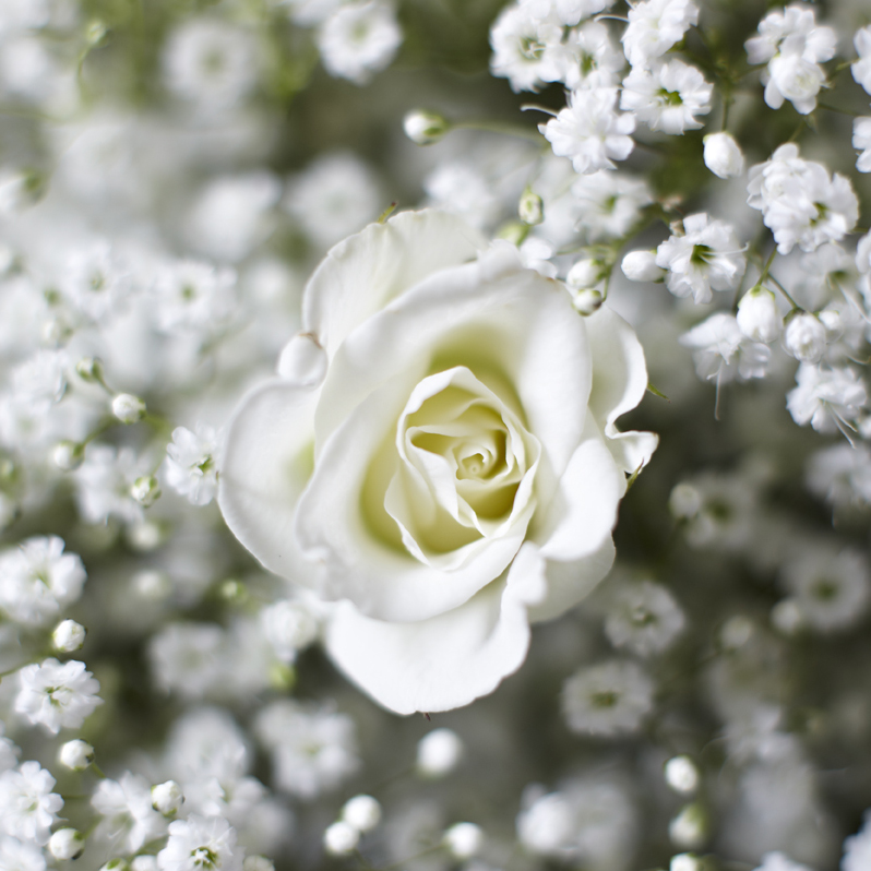 Ethereal Whites | Spray rose & gypsophila detail