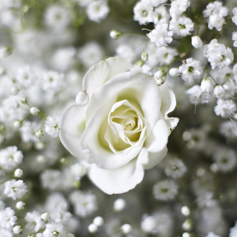 Ethereal Whites | Spray rose & gypsophila detail