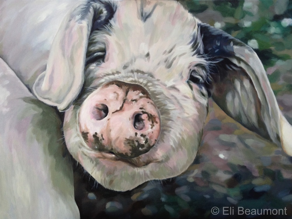 Pig - oil on canvas     80x60cm   PRIVATE COLLECTION