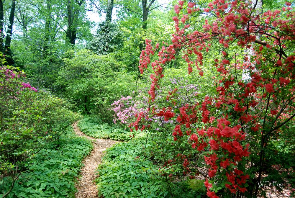 Lee-Garden-path