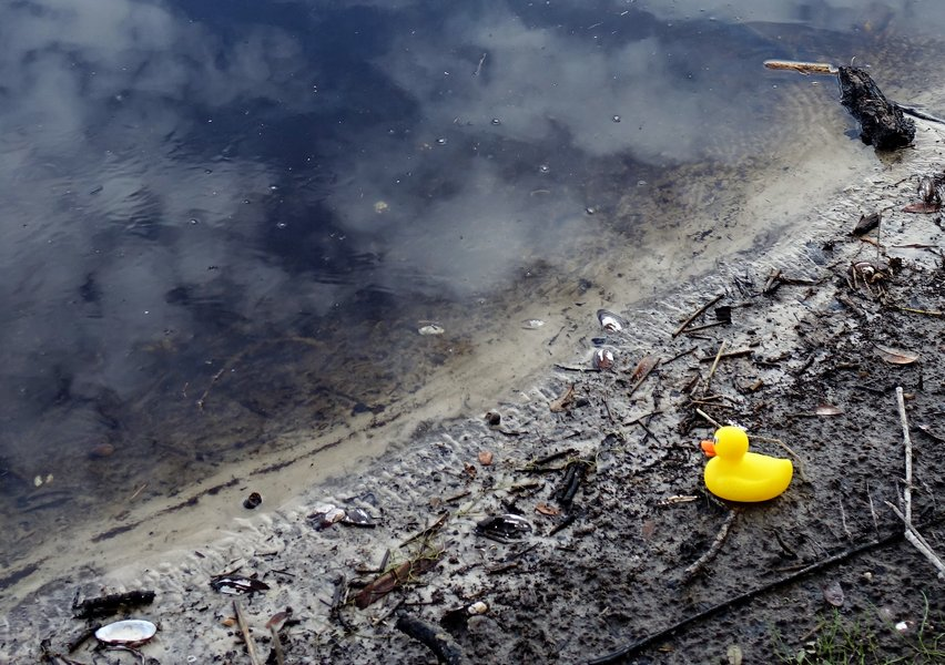 Rubber Duckie Swims Myakka River - Guest Post by Nancy Dobias