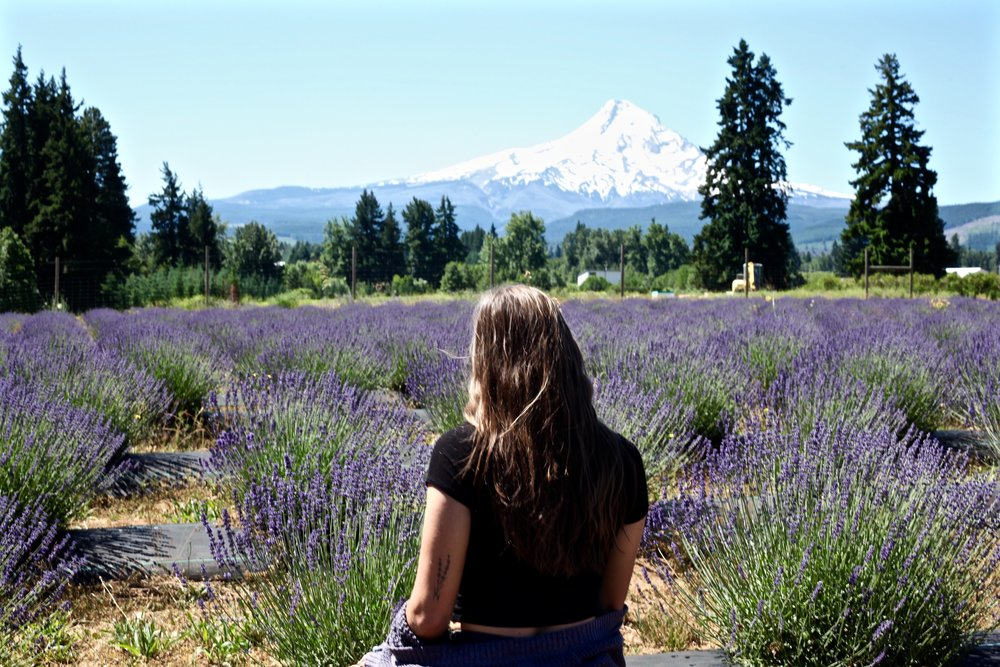 Lavender Valley, Oregon