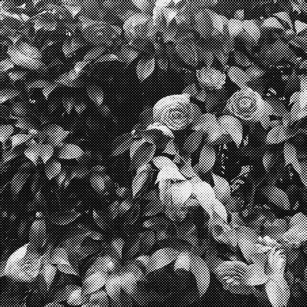 floral-bitmap.jpg