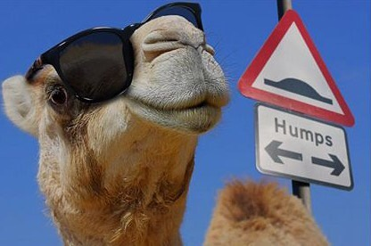It's all plain sailing once we get over the hump! 😎✌️🐪 #humpday