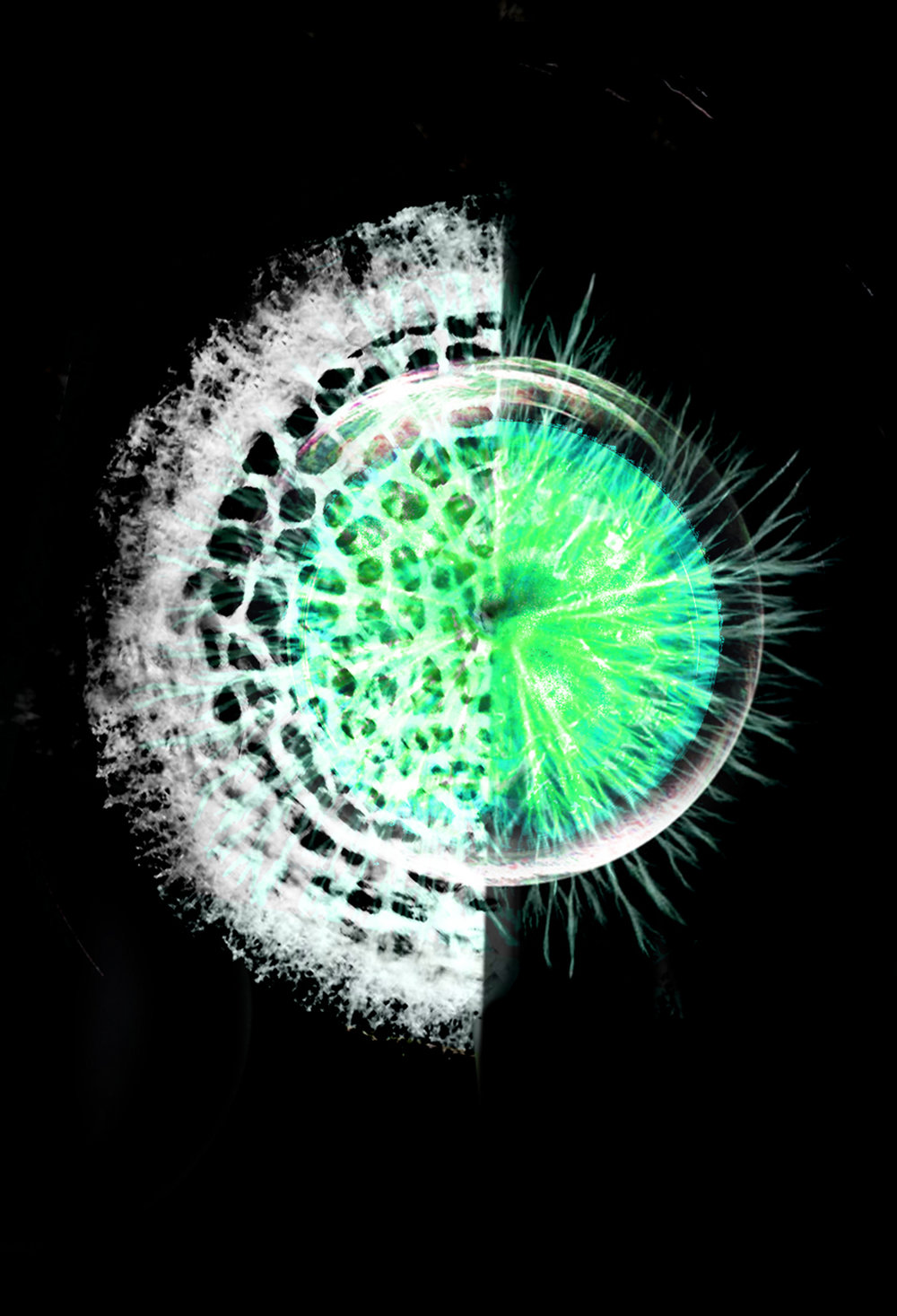green zoom.jpg
