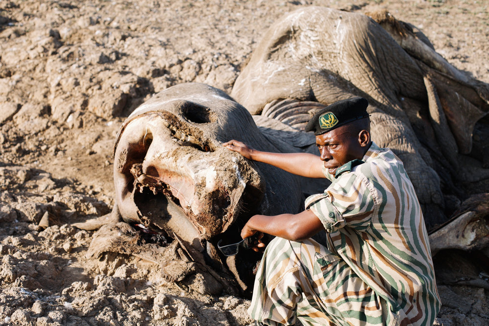 Zambia Poaching.jpg