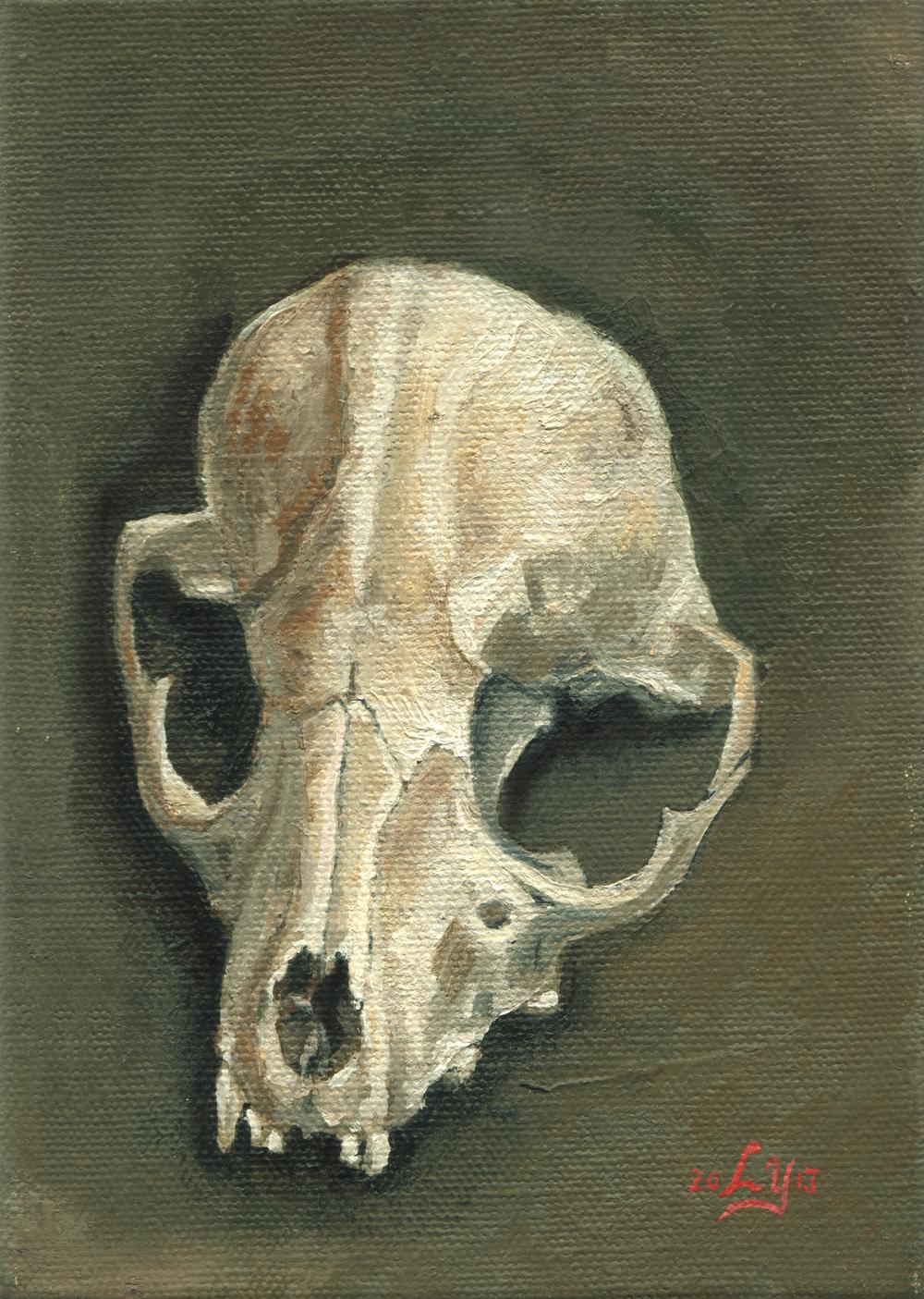 """""""Skull Study"""" (fox)"""