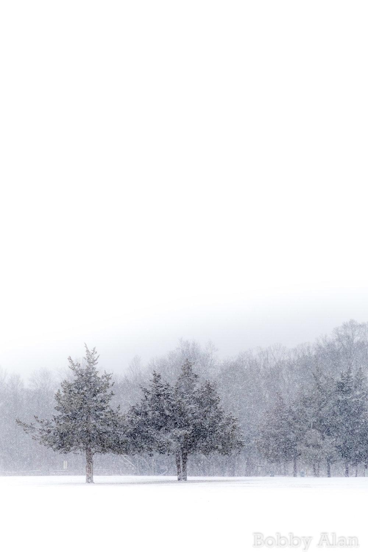 Winter Lasting