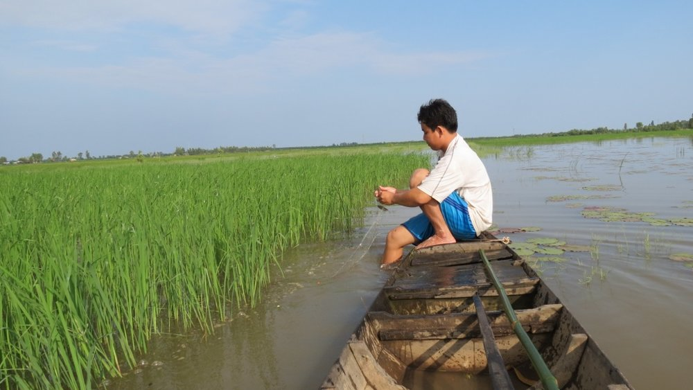 Farmer collecting freshwater fish in the floating rice fields during the flood season (Credit: Huynh Ngoc Duc)