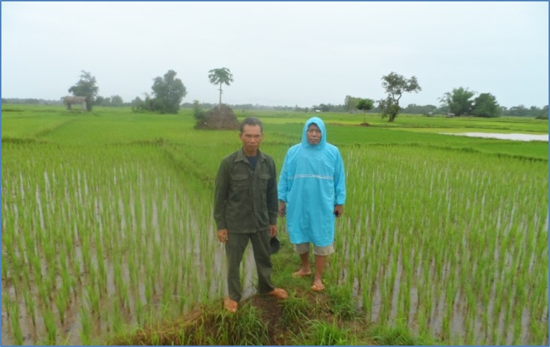Ajarn Outhai visits an organic rice farm in Phonthan Village, Savannakhet province (Credit: NAFC)