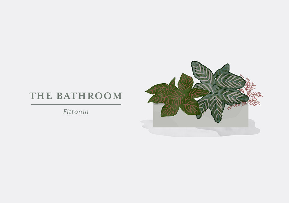 The trick to matching plants with a specific room in your home is getting to know the plants and their natural habitat. Fittonia grows in South America in tropical forests and is used to less light and high humidity. That is why it will thrive in your bathroom, even if you don't have a large window. You can also put it in a terrarium which is the household equivalent to the jungle, Fittonia is used to. The Fittonia is also known as Mosaic Plant due to the marvellous texture of the leaves which can be found in several different colours. The plant is a creeper, so you might want to put it in a hanging pot – that way you'll also save some room.