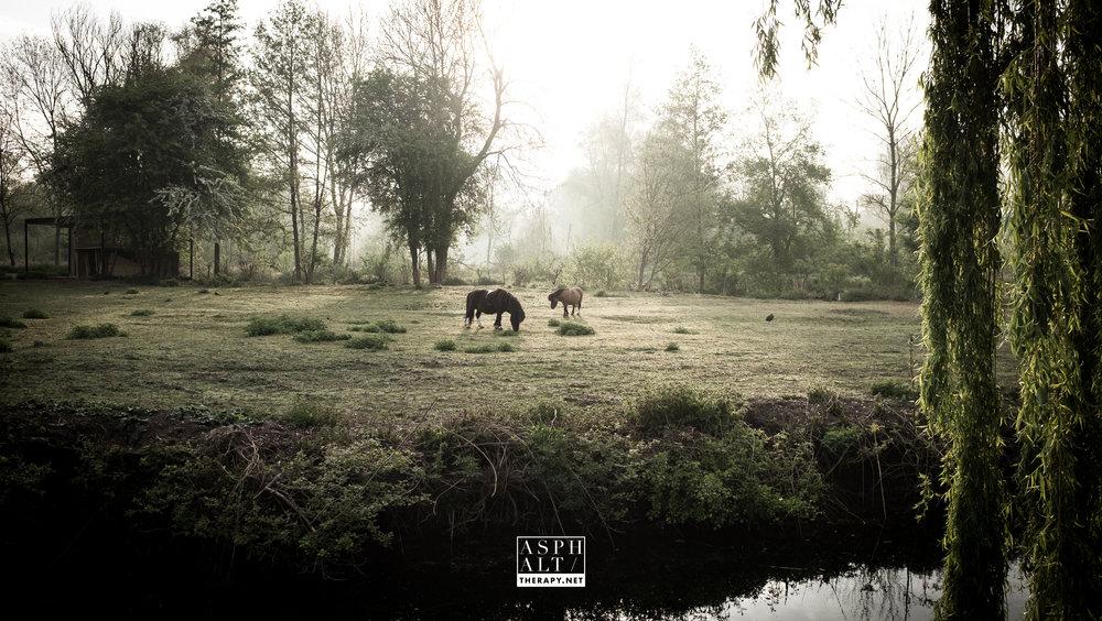 Je me suis demandé, en voyant ces poneys, si je ne devais pas en prendre un pour continuer ?