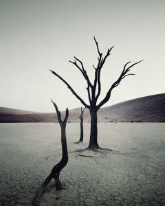 IV 469 Dead Vlei, Sossusvlei Namibia, 2011
