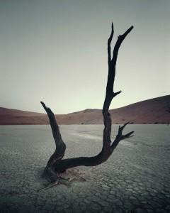 IV 470 Dead Vlei, Sossusvlei Namibia, 2011