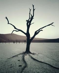 IV 472 Dead Vlei, Sossusvlei Namibia, 2011