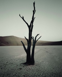 IV 473 Dead Vlei, Sossusvlei Namibia, 2011