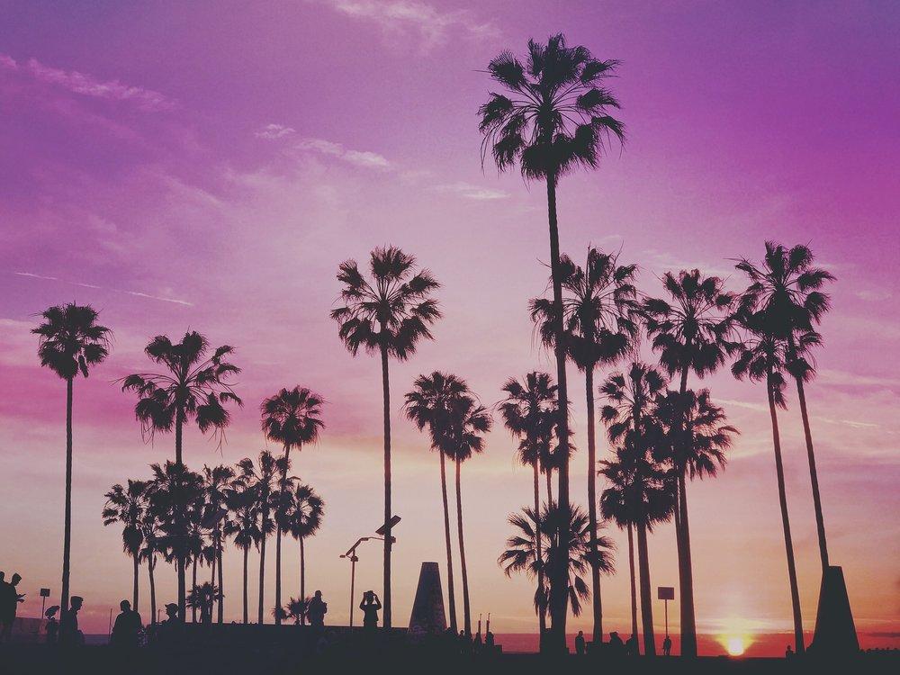 la-palm trees.jpg