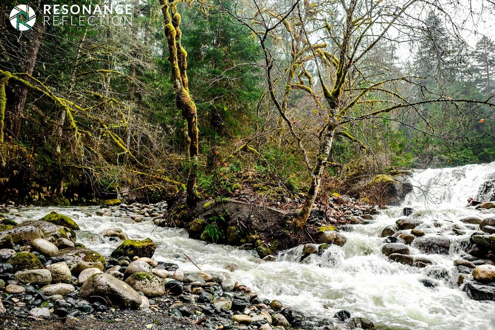 Location: Englishman River Falls. Vancouver Island, British Columbia, Canada.