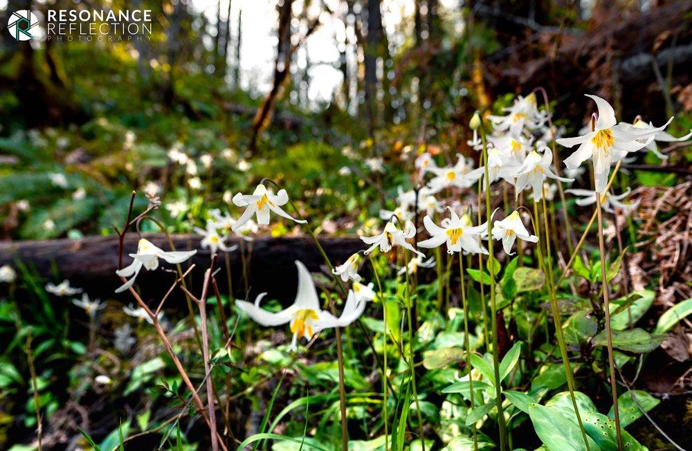 flowers cowichan river.jpg