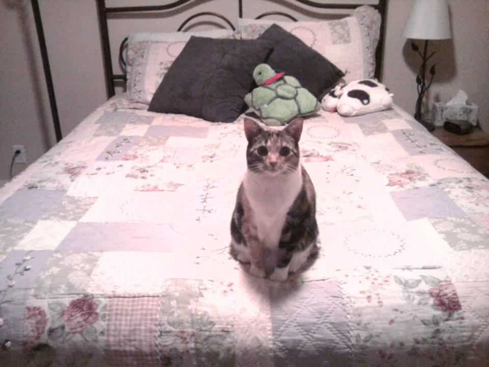 Pay no mind to the cat my mother adopted to replace me when I moved to New York- this image demonstrates the immaculate condition of the guest bedroom.