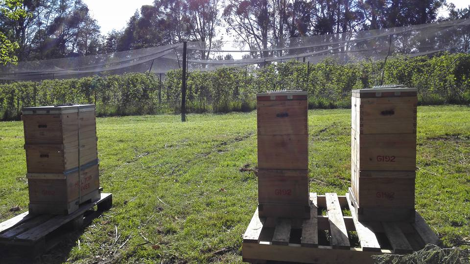 Pollination Services -