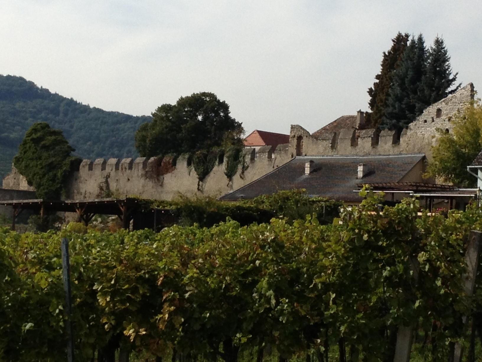 Vineyards and wall Durnstein