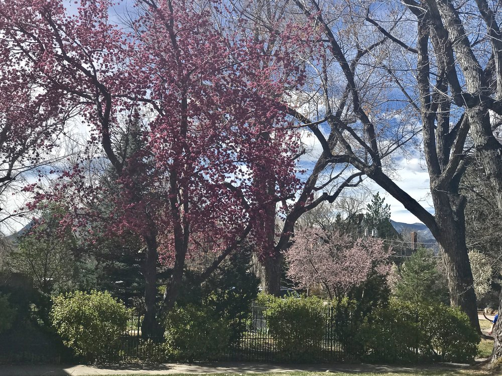 Spring is wild and uncontainable, so ever-present along my Colorado walks just now, but a visual reflection of His loveliness and redemption that is a promise.