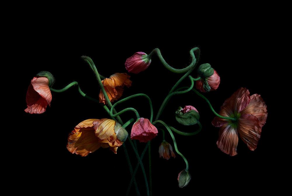 Ondrea-Barbe-Poppies.jpg