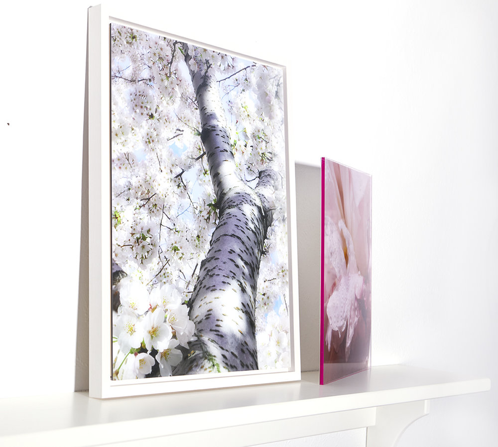 Detail of Cherry Blossom in white frame