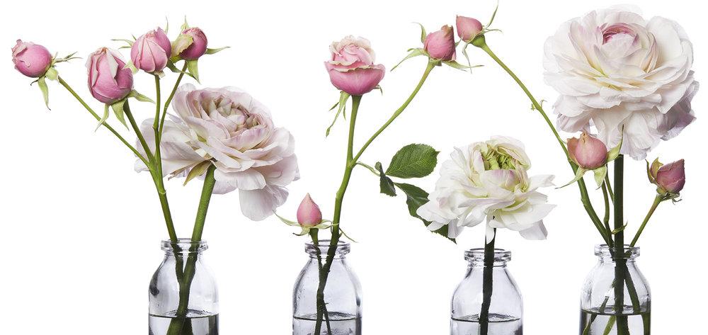 final roses for site.jpg