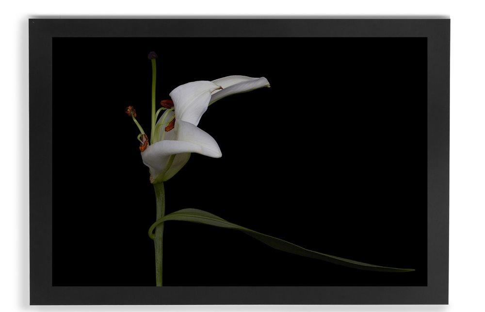 black_frame_CROP_40x60+072316_Lillies_on_Black_027 .jpg