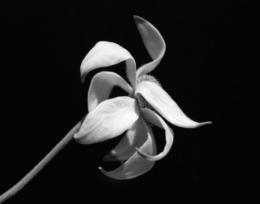 Simplicity_FlannelFlowers_OndreaBArbe.jpg